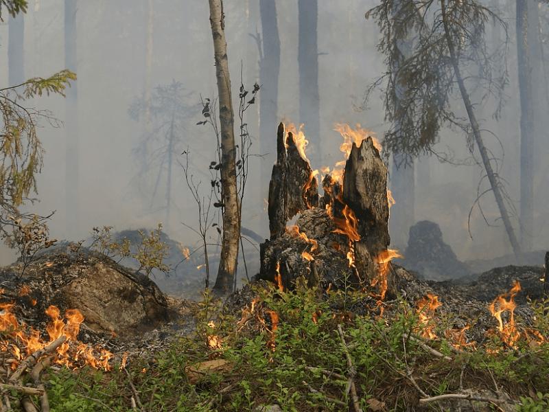 Ужесточают наказание виновников лесных пожаров