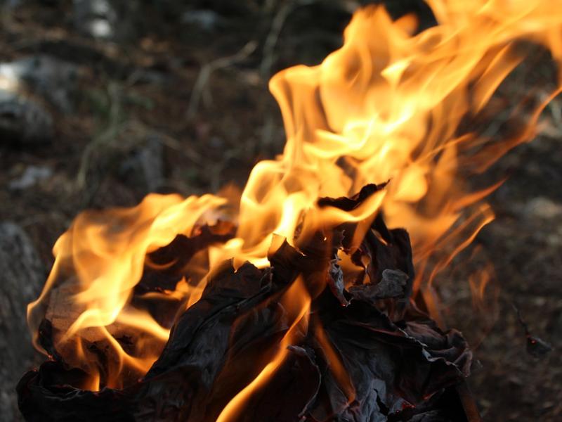 Увеличатся штрафы для виновных в лесном пожаре